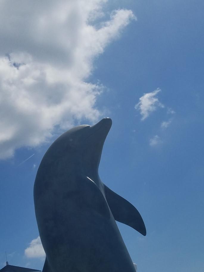 dolphinhead