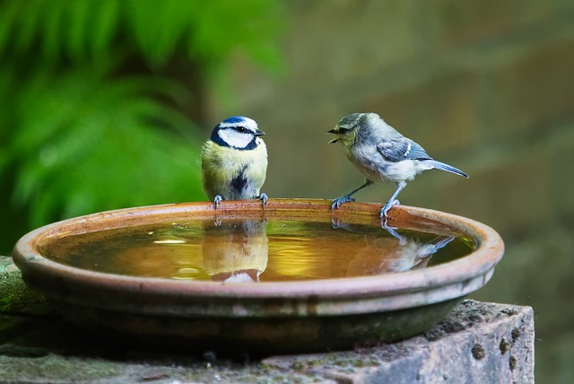 birdstill
