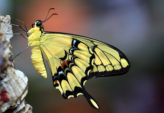 butterflypic