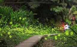 fireflygrass