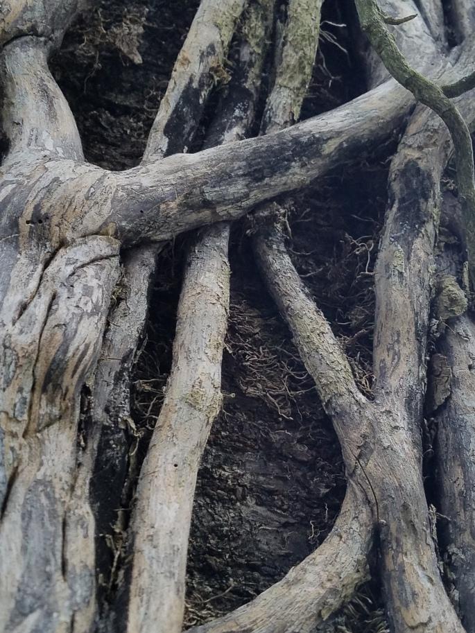 treebones