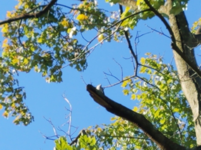 woodpeckerdone