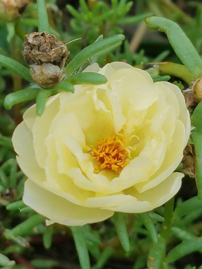 flowerbright