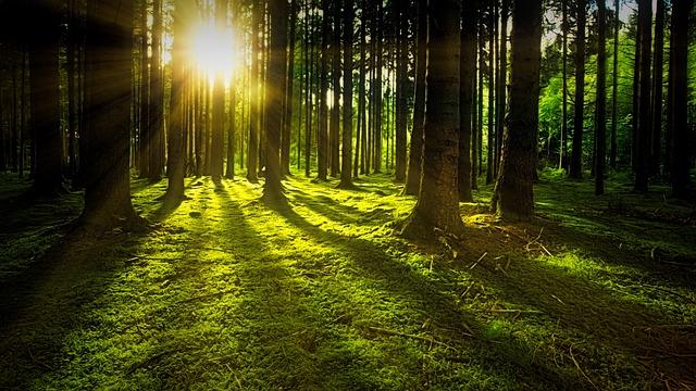 forestmornin