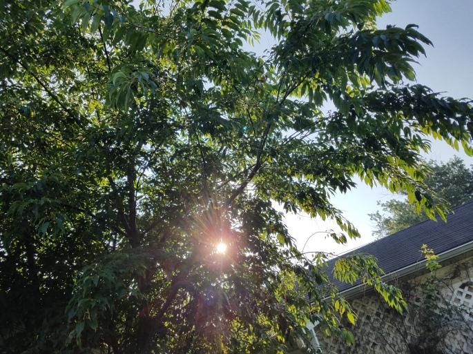 sunmorning