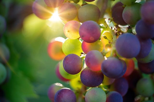 grapeslight