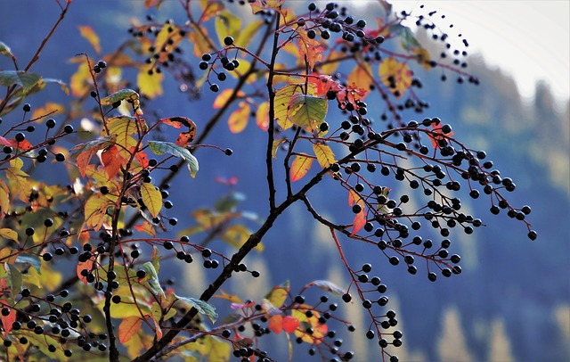 Fallberry
