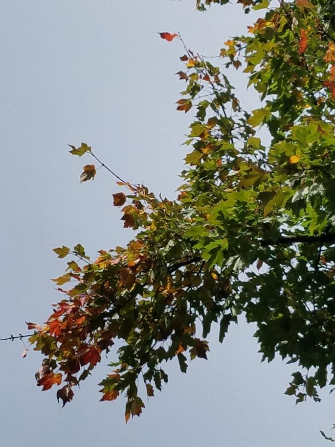 falltips