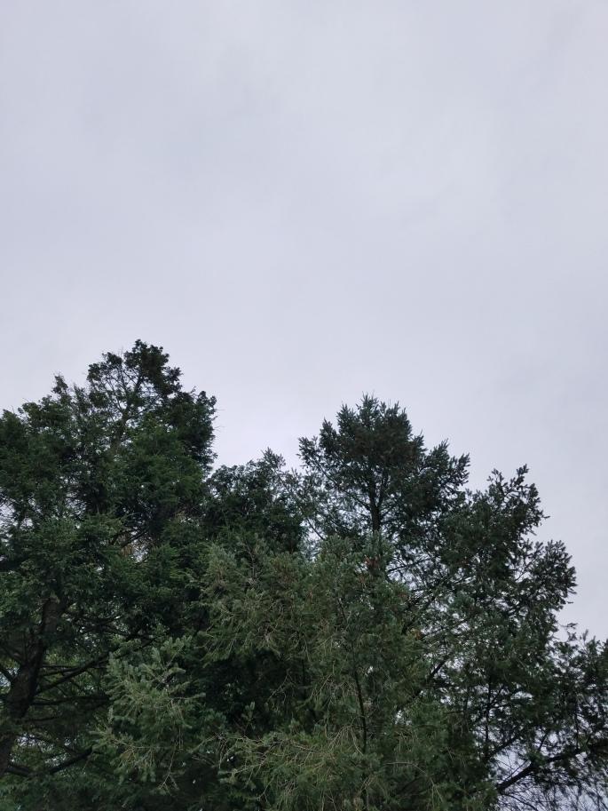graytree