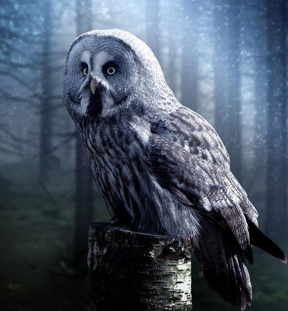 owlnight