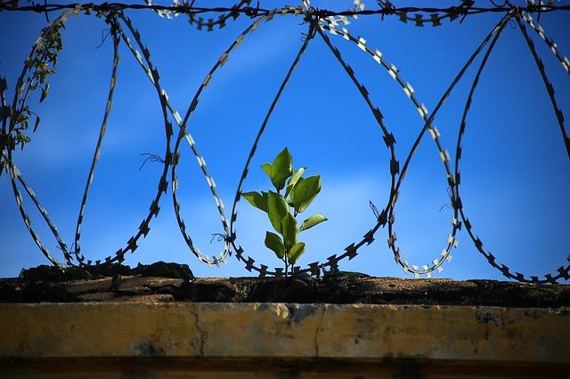 jailfree