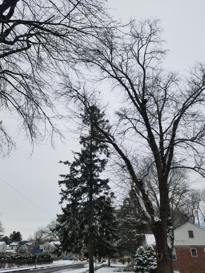 wintersky