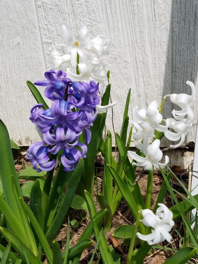 springrise