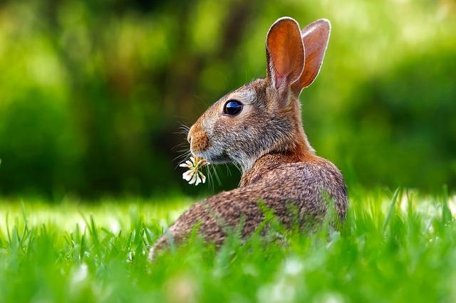 bunnydo