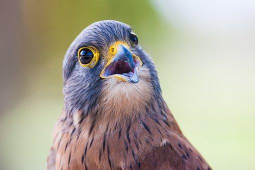 rockbird