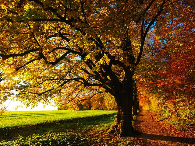 tree-779827__480