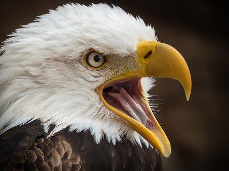 eagleyap