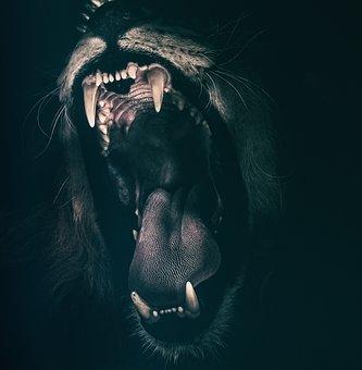 lionroaring
