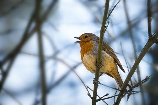 robinsing