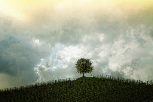 treevine
