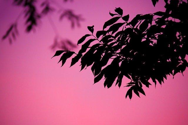 leafblood