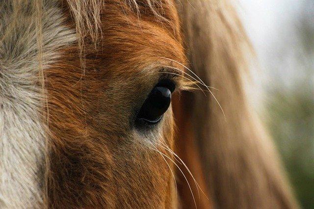 horse-2087980_640